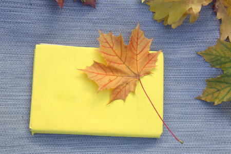 Autumn maple leaves on the yellow book.
