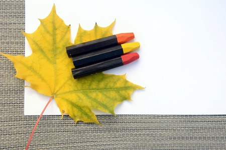 White sheet of paper with autumn maple leaves and colored pencils. It is lying on a gray Zdjęcie Seryjne