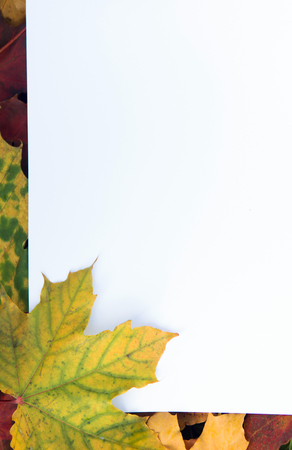 White sheet of paper with autumn maple leaves