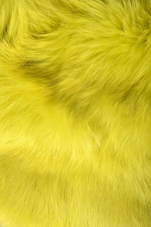 background texture of rabbit fur yellow color.