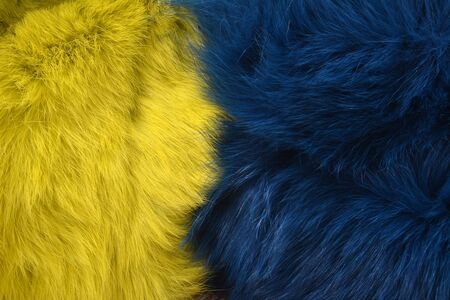 Blue and yellow rabbit fur background texture on the wooden table Фото со стока