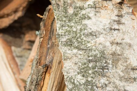 The birch bark. The texture of the wood in the pile.