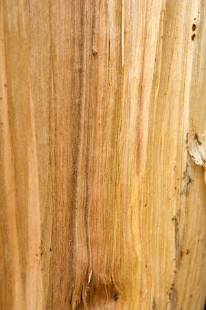 The texture of the birch slice. Wooden background. 免版税图像