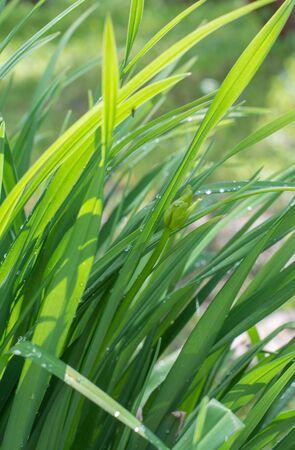Fresh green grass. Sunlight, day, bright juicy