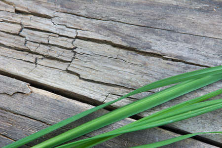 Green grass on a background of old wooden board