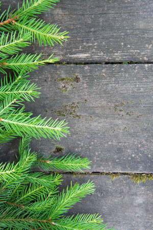 Green spruce branch Christmas tree on the wooden background