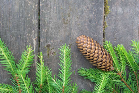 Green spruce branch with a cone on the wooden background