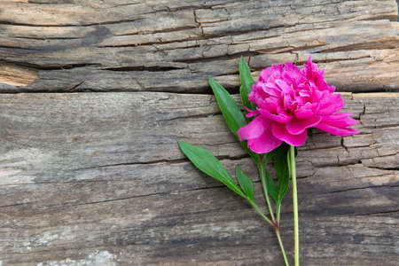 Flower peony with leaves on a beautiful old wooden board