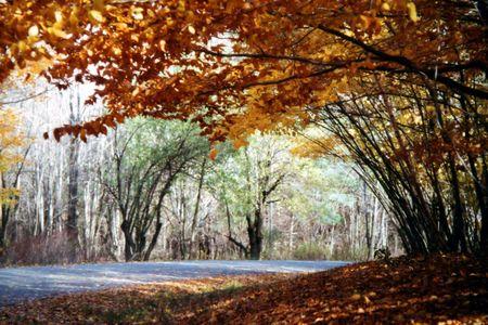 autumn arch 版權商用圖片
