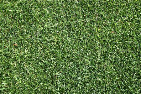 実際の草のテクスチャ
