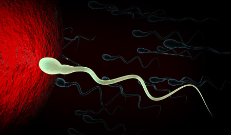 conjugation: 3d Illustration of medically accurate illustration of human sperms and egg