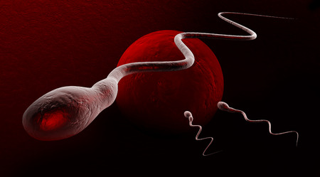 3d Illustration of medically accurate illustration of human sperms and egg