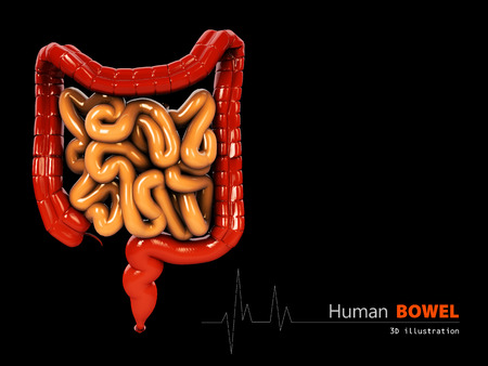 bowels: 3d Illustration of Bowels abstract scientific background