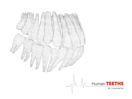 teeths: 3D Illustration of Teeths , medicine and health concept design element. Stock Photo
