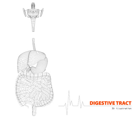 rectum: 3d illustration of Human digestive tract isolated white