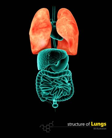 Human Lungs, Illustartion isolated black background
