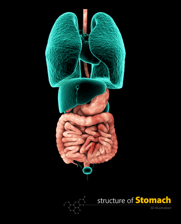 Human stomach and alimentary tract, Illustartion isolated black background