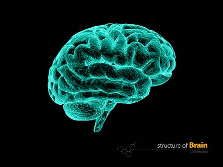 Human brain, x-ray, anatomy structure. Human brain anatomy 3d illustration.