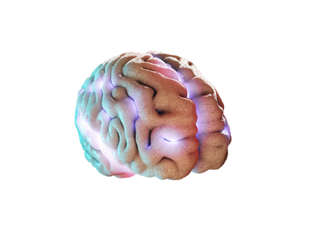 Concept of human intelligence with human brain on white background, 3d Illustration.
