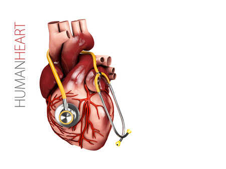 Human Heart Anatomy With Stethoscope Organs Symbol 3d Illustration