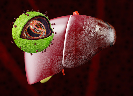Liver with Hepatitis virus. Structure of the hepatitis B virus. 3d illustration. Stock fotó