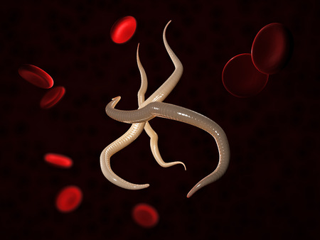 Parasitic nematode worms with blood cells, 3d Illustration Stock Photo