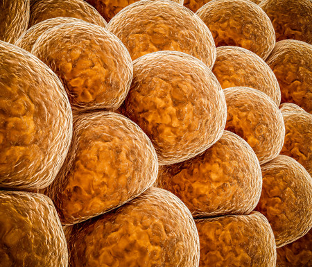 3d Illustration of Fat cells abstract background