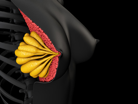 3d Illustration showing the female breast anatomy. Standard-Bild - 109292615