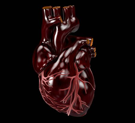 Human Heart - Anatomy of Human Heart 3d Illustration.