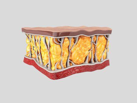 Fat cells. Inside human organism. 3d render Stock Photo