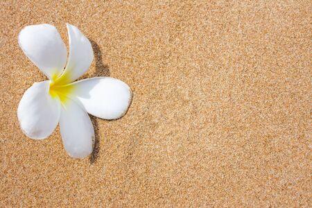 plumeria flowers on beach photo