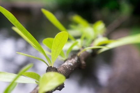 vegetate: The green leaves are growing  Stock Photo