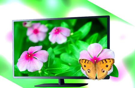 The butterfly 3d tv green background  photo