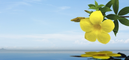 yellow flower on the sea background