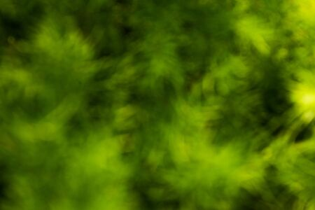 greenness: abstract dark green background