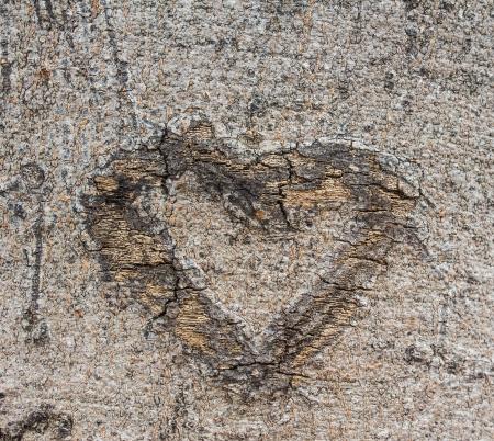 Bark heart  photo