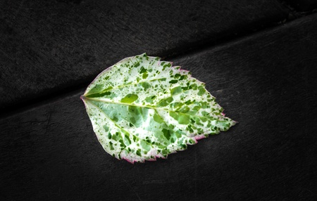 colorful leaf on black and white background