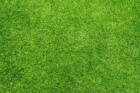 blade of grass: Sward texture