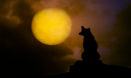 dog and moon at night  Standard-Bild