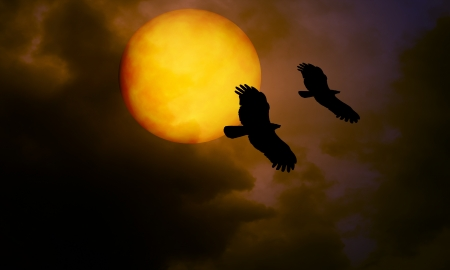 bird and moon at night