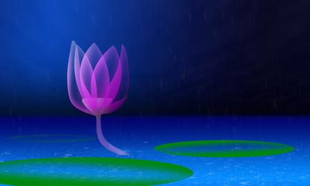 lotus wallpaper  photo