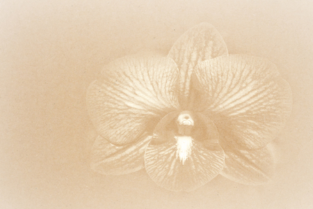 Orchids paper background  photo