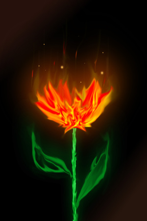 Rose abstract fire  photo