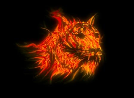 tiger fire  photo