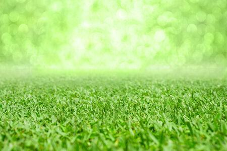 Beautiful green grass bokeh background  photo