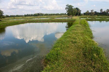 oreochromis niloticus: Fish farm