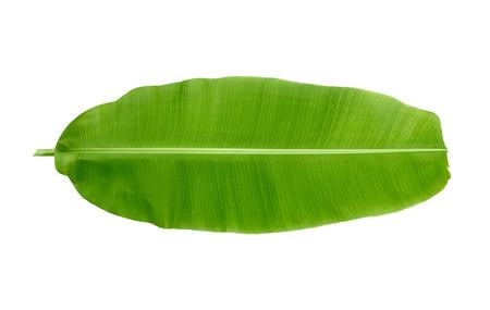 白い背景の上のバナナの葉
