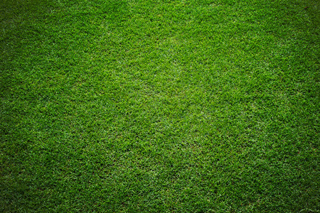 campo di calcio: erba dello stadio di fondo