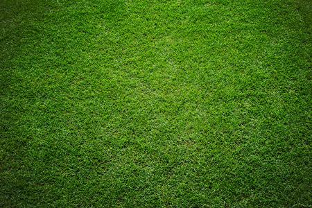 terrain de foot: herbe du stade de fond Banque d'images