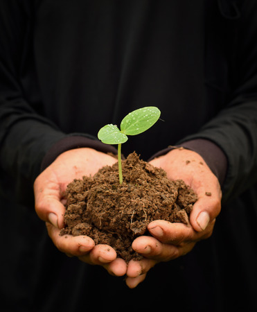 Hands holding a green young plant. Symbol of ecology concept.
